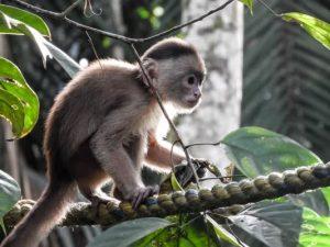 Mono Titi Amazonas - Colombie - DESTINATIONS LATINES