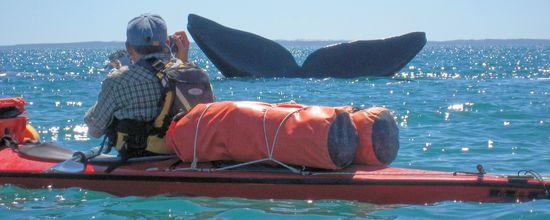 Kayak a Puerto Madryn - Péninsule Valdes - Argentine