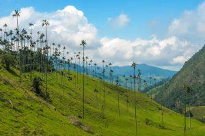 Région du café - colombie-DESTINATIONS LATINES