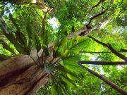 Forêt amazonienne - Pérou