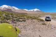 L'Altiplano dominé par la silhouette du Coropuna - Pérou