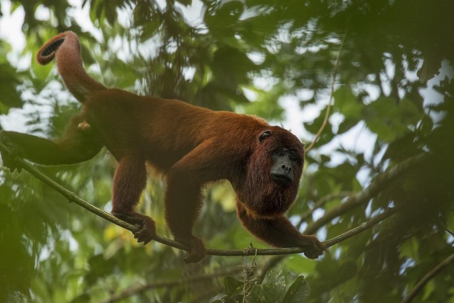 image de présentation pour le voyage Séjour de charme en Amazonie